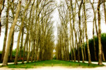 """Path to Petite Trianon at Versailles  13""""X19"""""""